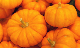 This Season's Best Pumpkin Products