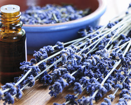 Best Essential Oils for Fall