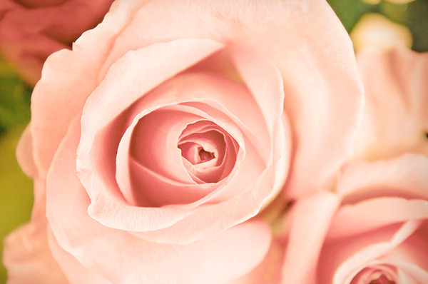 The Centuries-Long History of Roses-As-Cosmetics
