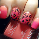 Leopard And Ombre