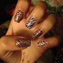 Cheetahs & Zebras
