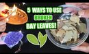 5 WAYS TO USE BROKEN BAY LEAVES FOR MANIFESTING, PROTECTION AND LUCK!