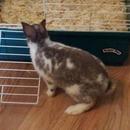 Daisy My First Baby Bunny