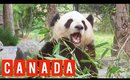 Travel in Canada 2 ♥ Toronto, Niagara Falls, Panda, etc. ♥