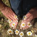 Flowers/
