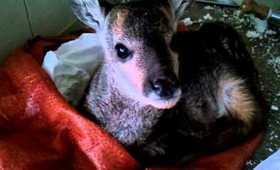 Cute Baby Deer!