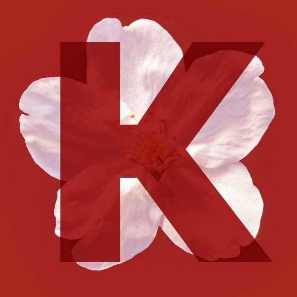 Letter K from the name Sakura with a cherry blossom