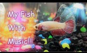 My Pet Fish in the Aquarium with Music