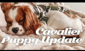 cavalier king charles spaniel puppy update / our experience with raising a puppy ✖︎ EverSoCozy