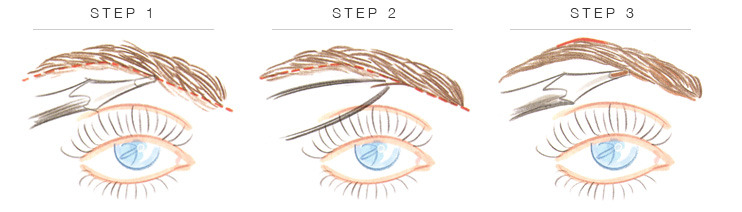 eyebrow tweezing guide. tweezing 101 eyebrow guide