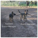 I Wanna Be A Branch Manager