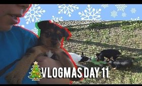 🎄 VLOGMAS DAY 11: GOODBYE TO ALL THE PUPPIES 😢 | MakeupANNimal