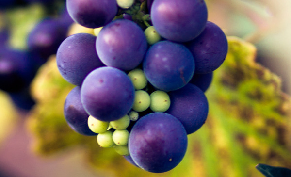 Diy Grape Skin Care Recipes Beautylish