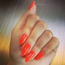 Orange Cat Claws