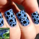 Blue Poison-Dart Frog