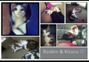 Raiden - grey & white. Kitana - black, white and ginger