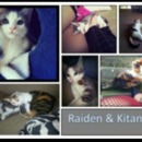 Raiden & Kitana - my MK kitties ;)