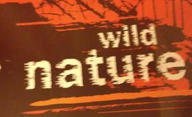 Manicure Wild nature
