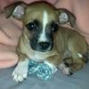 Baby Tippi.