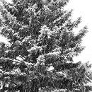 Winter Scene  :)