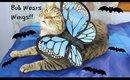 Cat Wings! | Bub's First OOTD | Bubberfly or BatCat?