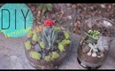 DIY Indoor Garden - Terrarium Father's Day Gift Idea