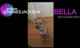BELLA MY TALKING DOG !