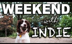 Weekend with Indie ... and the chores I didn't do.