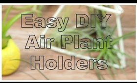 DIY Room Decor Using Air Plants