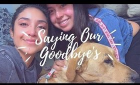 Vlog: Having To Put Our Beloved Dog To Sleep