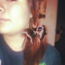 Bow tie ponytail