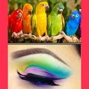 Rainbow birds!!