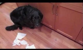 Guilty Puppy