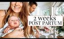 DAY IN THE LIFE WITH A NEWBORN AND TWIN TODDLERS! 2 WEEKS POST PARTUM | Kendra Atkins
