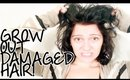 Tips for Growing Out Damaged Hair | Instant Beauty ♡
