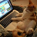 Cat With it's paws on a keyboard.
