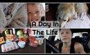 Healthy Living On A Budget | Danielle Scott