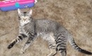 Ramses Playing With Plastic Easter Egg Adorable Kitten