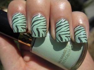 Minted Zebra