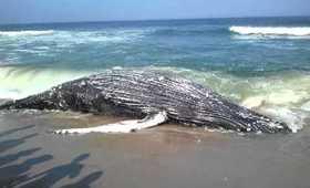 Beach whale Island beach state park