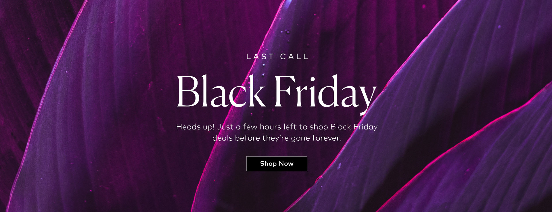 Shop our Black Friday Event now!