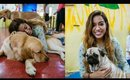A day in a Dog Cafe - Pawfect Life 🐾❤️   | Debasree Banerjee