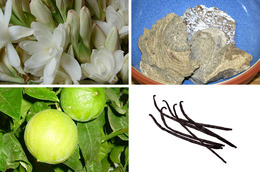 A Closer Look at Common Perfume Ingredients, Round 2