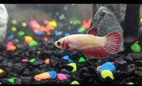 My Pet Fish in the Aquarium