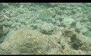 Hanauma Bay Underwater Video of Fishes 6.20.13 Part 3