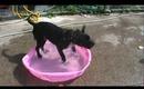 VLOG: Bishop in the pool ♥