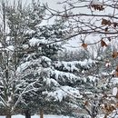 Snow Scene  :)
