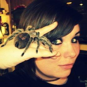 Spider Pics