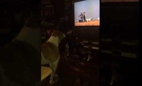 Kupid watching dogs on tv