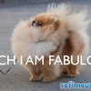 For My Friend Who Has A Pom Named 'Rocious'